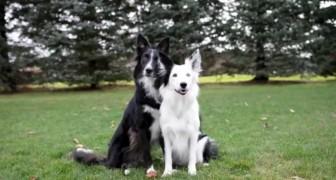 Kvinna ska just fotografera sina hundar... men titta noga på den svarta!