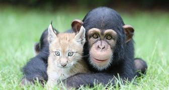 Twintig uiterst eigenaardige vriendschappen die nog nooit eerder zijn voorgekomen in het dierenrijk