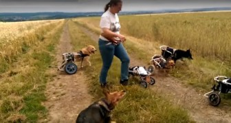 A woman plays in the countryside with a group of dogs that are really SPECIAL. Wow!