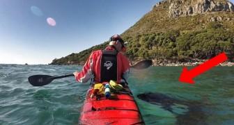 Sta facendo un giro in kayak, ma arriva un vecchio amico a salutarlo