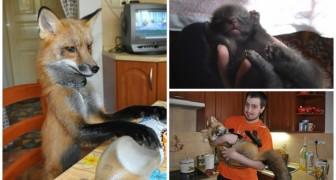 Ondanks alle moeilijkheden,adopteert deze jongen een vos om haar te redden van een vreselijk lot.