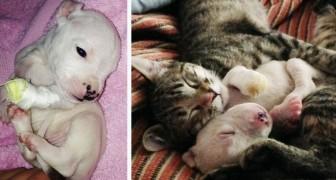 Un gatto adotta un cucciolo di cane salvandolo dalla madre che stava per mangiarlo