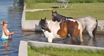 Ze neemt haar paarden voor de eerste keer mee het water in: hun reactie is geweldig!