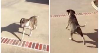 Hij was verlamd na een val in een zwembad: in deze video zie je hoe hij zijn eerste stappen zet