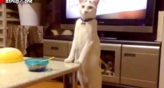 Het menselijke gedrag van deze kat gaat de verbeelding te buiten