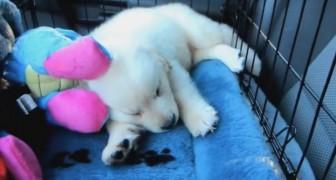 Era un cucciolo assonnato quando lo portarono a casa, ma guardate un anno dopo...