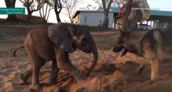 Un piccolo di elefante lotta per la vita aiutato dall'amicizia di un compagno speciale