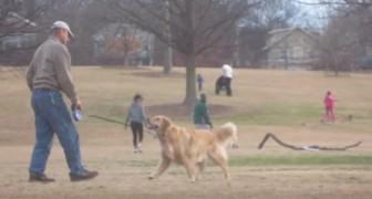 È arrivata l'ora di lasciare il parco... Cosa fa il cane pur di restare è uno spasso!