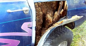 A man removes the body panel of a car ... What lies beneath is SCARY!
