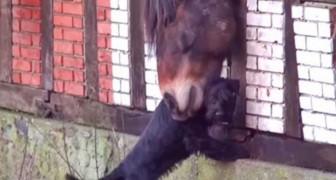De vriendschap tussen deze twee dieren heeft duizenden mensen in het hart geraakt
