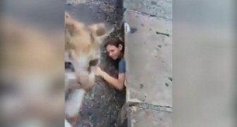 A girl goes down a storm drain ... what she is going to do deserves a medal!