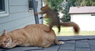 Deze kat rust lekker uit op het dak, totdat hij bezoek krijgt van een SPECIALE vriend...