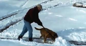 Deze man probeert zijn tuin sneeuwvrij te maken... zijn trouwe viervoeter helpt graag een handje mee!