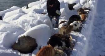 Ogni mattina 350 gatti aspettano l'arrivo di questa donna: ciò che fa è esemplare