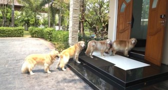 FOUR DOGS wait patiently in line at the front door! Why?! The reason is SURPRISING!