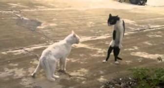 I gatti più scemi del web
