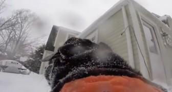 Una giornata trascorsa a giocare con la neve, raccontata da un punto di vista... CANINO