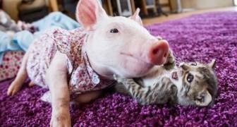 En big en een kitten worden gered: dit is hoe ze er vandaag de dag aan toe zijn... Wow!