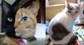 10 gatti a cui la natura ha voluto dare un segno particolare INCONFONDIBILE