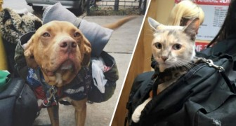 Veel mensen denken dat het weghalen van de hond of kat bij de dakloze een goed idee is, maar het kan ook ANDERS