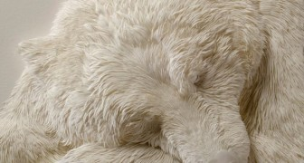Op het eerste oog lijkt het een slapende ijsbeer ... maar het materiaal waarvan het gemaakt is zal je verwonderen