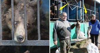 Una coppia di anziani cerca in ogni modo di tenere in vita gli animali di uno zoo abbandonato