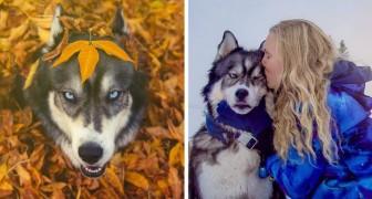 Elle vivait une relation violente: ce qu'a fait son husky lui a changé sa vie