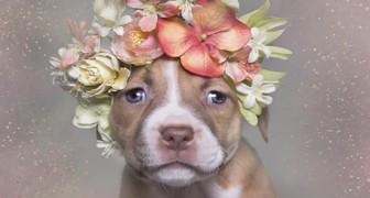 Een fotograaf laat ons de ware aard van een pitbull zien aan de hand van nooit eerder vertoonde foto's
