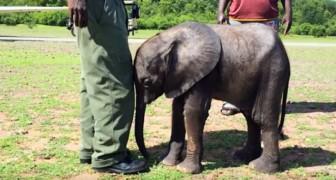 Ecco cosa significa diventare la madre adottiva di un elefante