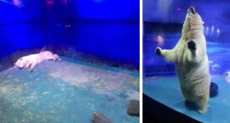 De droevigste dierentuin ter wereld bevindt zich in een winkelcentrum in China...