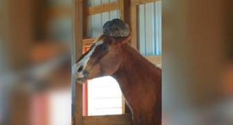 A woman goes to check on her horse....BUT she does not expect to see THAT on its head!