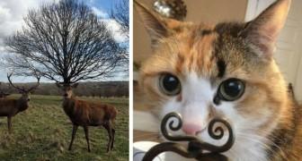 Coïncidences ... photographiques : 20 curieuses images prises au bon moment