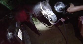 Un vecchio cavallo viene abbandonato a morire... i suoi occhi sembrano chiedere aiuto