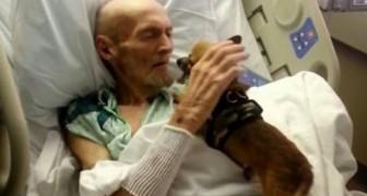 Ils font entrer les chiens à l'hôpital pour donner le moral à leurs maîtres: les effets sont surprenants