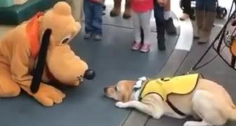Un cane guida incontra il suo personaggio Disney preferito... la reazione è dolcissima