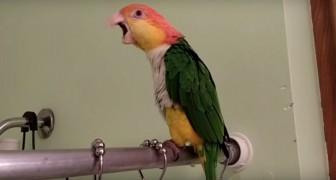 Un pappagallo entra nella doccia... La sua reazione? Quella che avremmo anche noi!