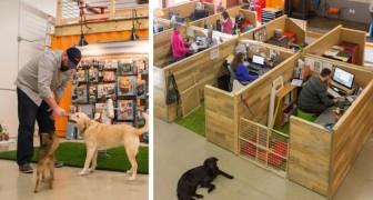 Ramener ses chiens sur son lieu de travail? Voici le bureau le plusdog-friendly qui existe