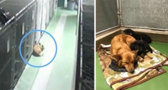 Un cane scappa dalla sua gabbia in canile: ciò che sta per fare stupisce anche i volontari