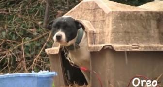 Deze honden worden bevrijd van hun kettingen... Dit filmpje zal je diep raken