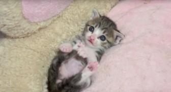 Een kleine kitten ontspant zich na het voeden: binnen 2 seconden zul je tot over je oren verliefd zijn op dit diertje!