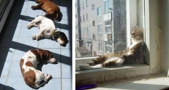 23 foto's van dieren die dol zijn op de warmte