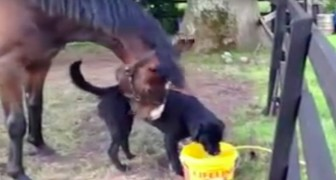 Toen ze hadden besloten om een hond te adopteren, hadden ze niet verwacht dat dit tot dit spektakel zou leiden