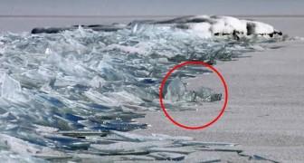 Ett par fotografer lyckas filma ett förvånansvärt fenomen på en frysen sjö
