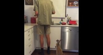 Hij maakt zijn melk klaar, maar deze baby kangoeroe kan gewoon niet wachten!