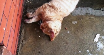 A kitten was found almost frozen to death on his porch ... this is how he revives it!