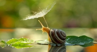 20 poëtische foto's die slakken vanuit een bijzonder perspectief laten zien