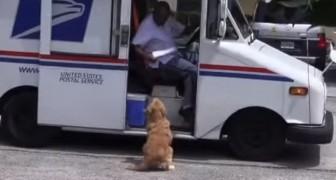 Tutte le mattine questo cane aspetta il postino... Ciò che fa è adorabile