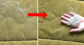 Need to remove pet hair from your furniture? Here's the fastest way to do it!