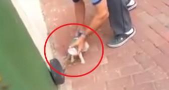Een kat is met zijn kop vast komen te zitten in een blik: de acties van deze man zijn een applaus waard!
