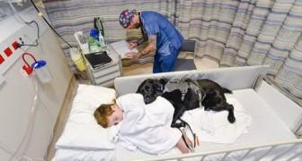 Ce chien n'abandonne pas son ami, même à l'hôpital: voici ce que ça veut dire aimer